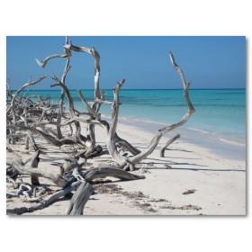 Αφίσα (θάλασσα, δέντρο, άμμος, Κούβα, καλοκαίρι, ήλιος)